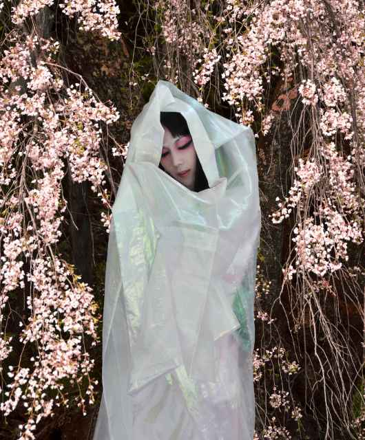 Cherry Blossom・Cocoon